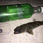 釣り初心者が多摩川鰻をペットボトル釣法でねらってみた