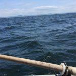 三浦半島金田湾の泳がせ釣りで、マゴチ・ヒラメを狙ってみる