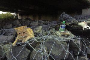 20160809海老取川の猫