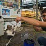 【夏休み】子供と一緒のレジャーは江戸川放水路でハゼ釣りがオススメ