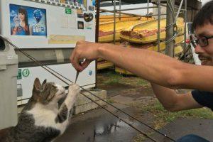 20160716江戸川放水路 釣り人は猫と交流