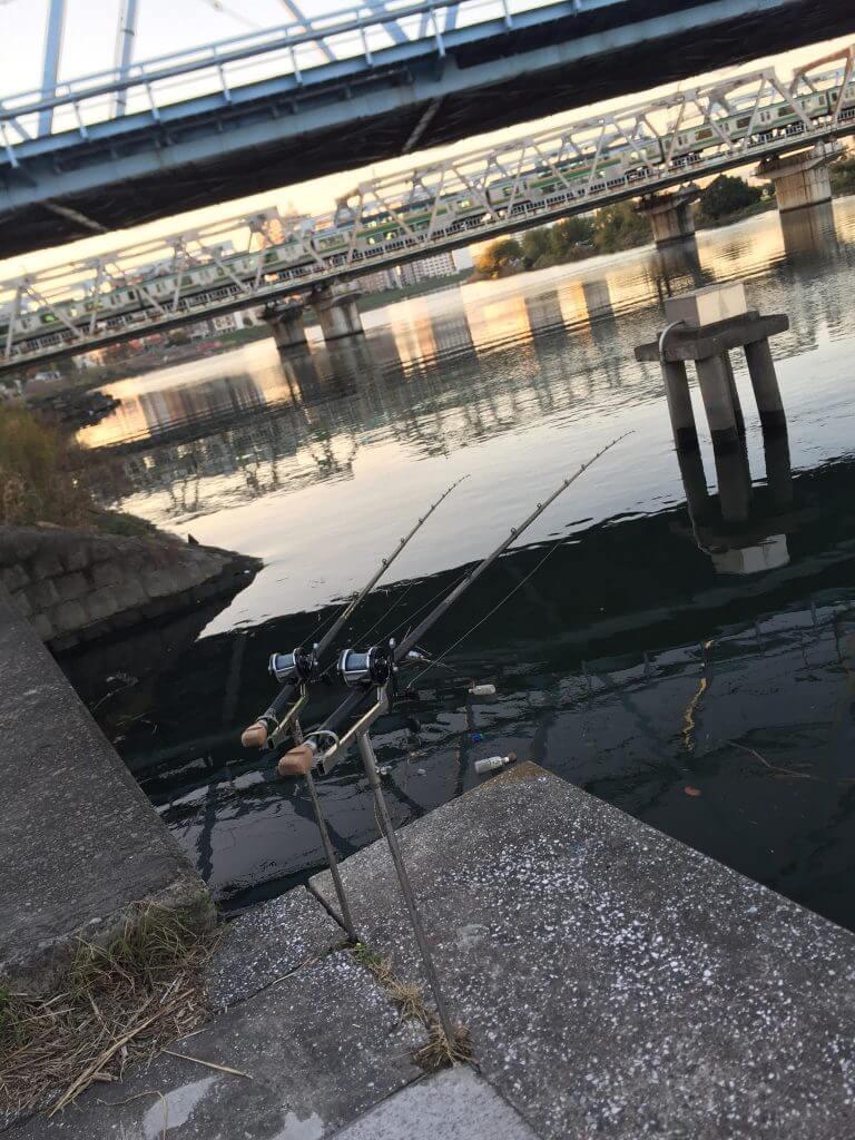多摩川鯉釣り