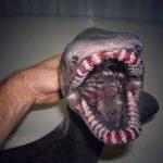 恐ロシアのトロール船漁師がSNSにアップしている深海生物が魔物じみている