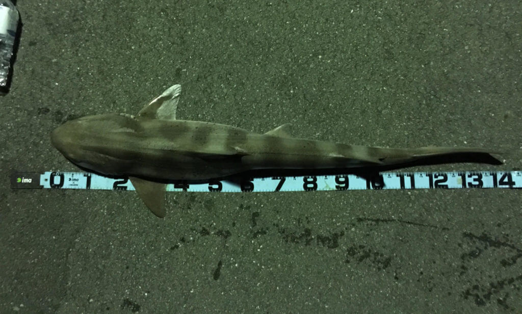 ふれーゆ裏 サメ