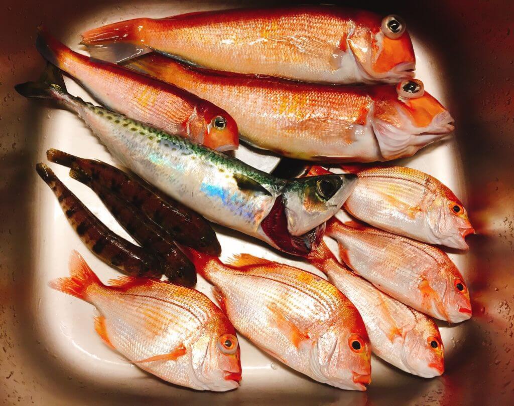 城ケ島沖の釣果(アマダイ、黄鯛、トラギス、サバ)