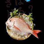 釣り初心者は『さばけるチャンネル』で魚のさばき方をマスターしましょう