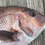 海上釣堀『みうら海王(かいおう)』は釣れないの?餌やポイントなど釣果をあげる5つのコツ
