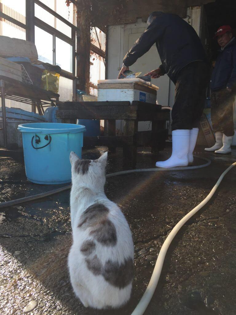 青物をさばくおじさんと猫