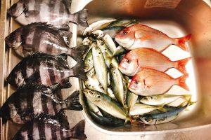 平塚沖LT五目で釣れた魚