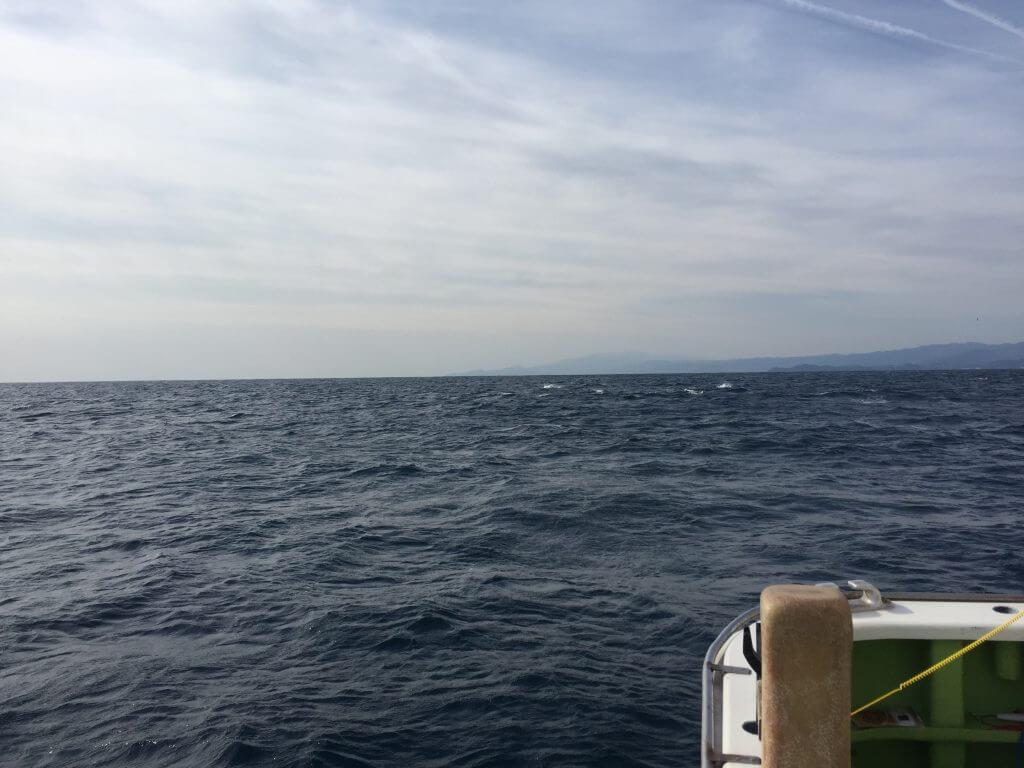 相模湾とイルカ