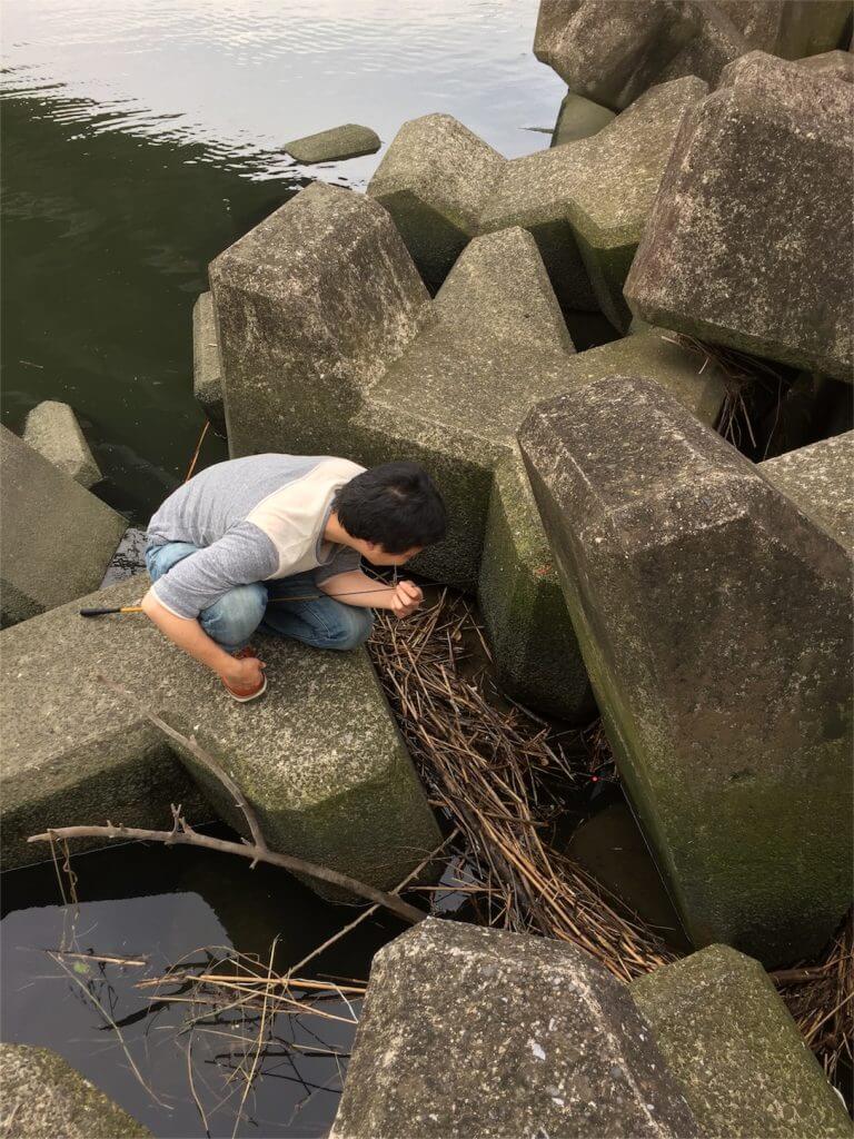多摩川 テナガエビ テトラ