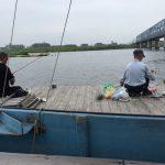 【釣り初心者も簡単に釣れる】マハゼの釣り方・ノウハウ