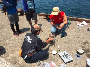城ケ島岸壁 俺たちの釣り公式戦 イワシ 堤防調理