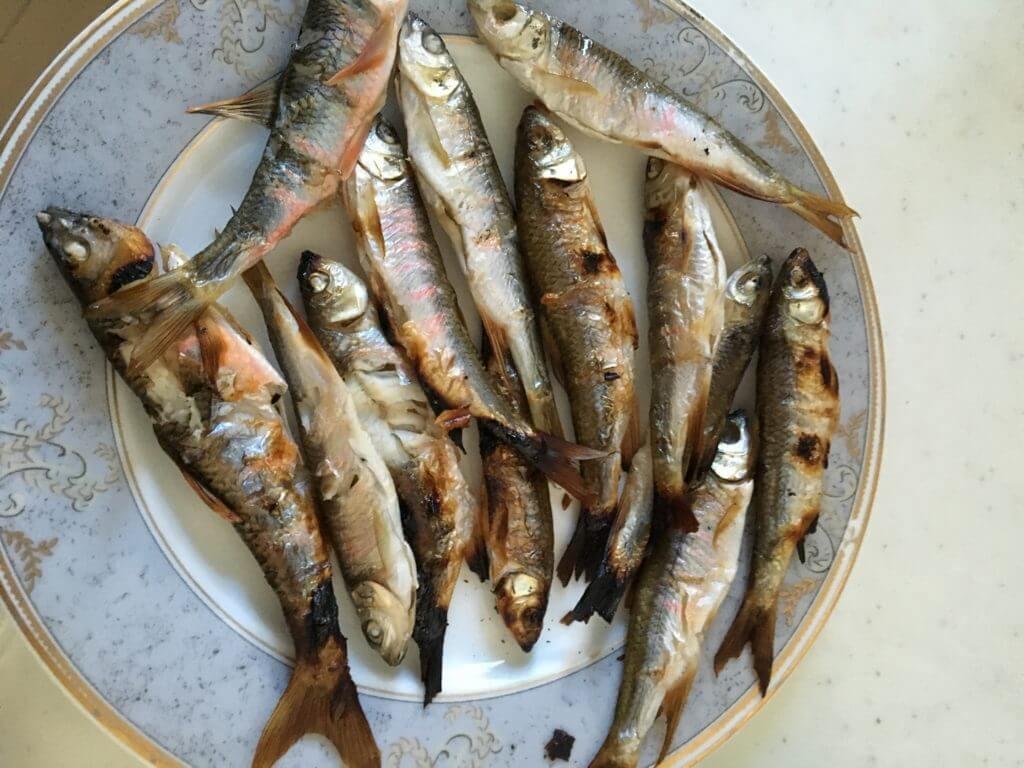 釣り 多摩川 オイカワ甘露煮