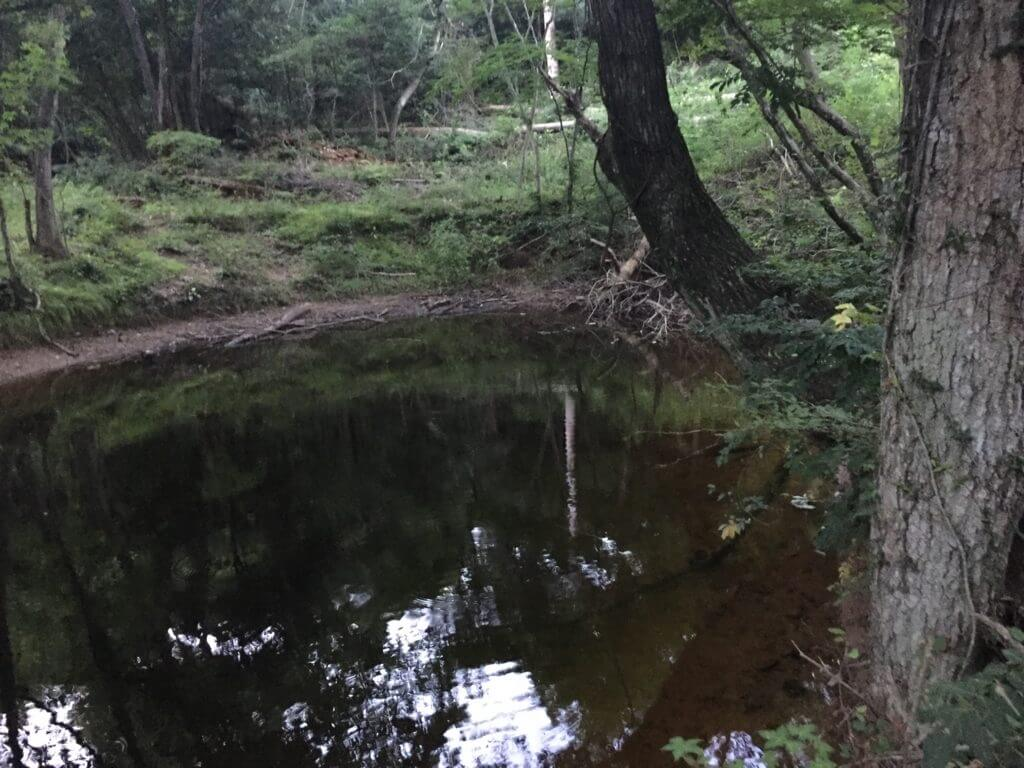 佐野 野池 ブラックバス釣り