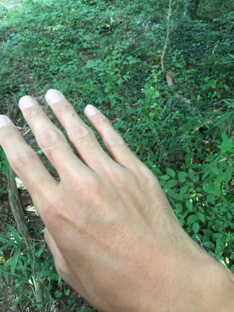 夏休み 野池 釣り 蜘蛛の巣