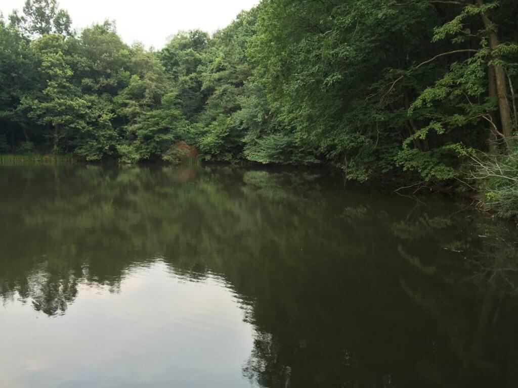 夏休み 野池 釣り