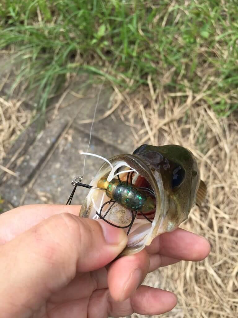 ブラックバス釣り 千葉野池 活虫