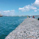 5月・6月に堤防釣りで釣れる魚と釣り方まとめ(アオリイカ・カサゴ釣り編)