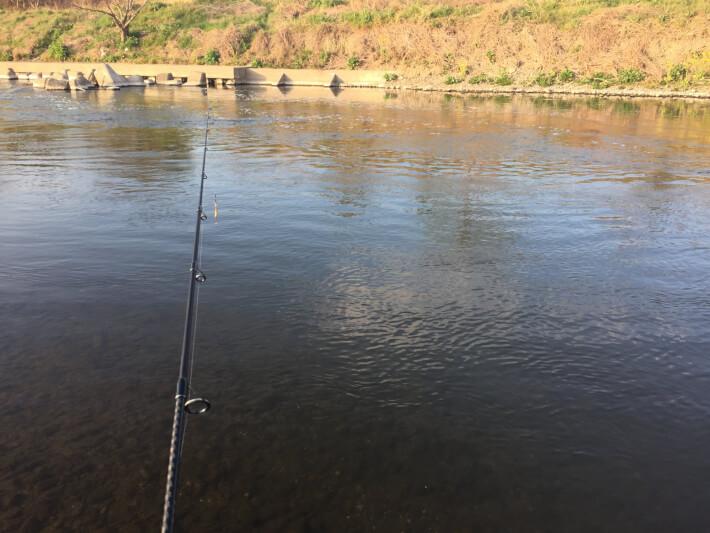 多摩川のトロ場を狙う
