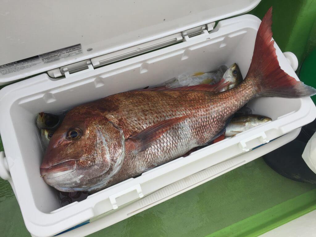 遠征コマセ五目で釣られた真鯛