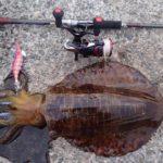 神奈川エギングで2キロのモンスターアオリイカが釣れた!<釣りバカ少年タッキーからの寄稿>