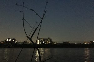 夕まずめウナギ釣り