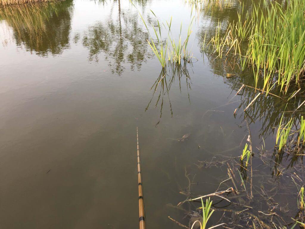 多摩川のワンドで小物釣り