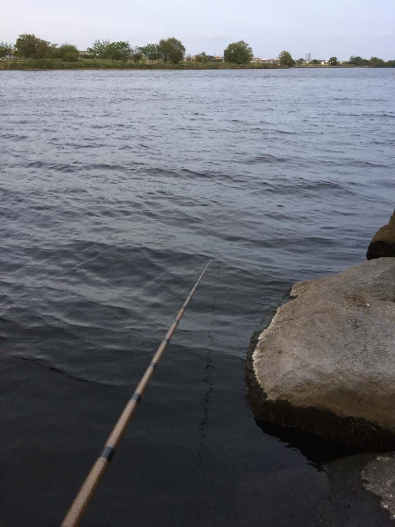多摩川で小物釣り