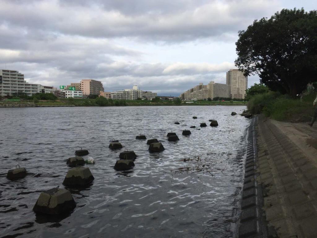 多摩川大橋でテナガエビ釣り