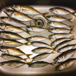 LTアジ釣りは船釣り初心者の味方!(食べる編)|東京湾金沢八景沖釣行