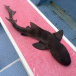 【なかけんの『食べ釣り』】千葉県飯岡港で初めてのヒラメ釣り