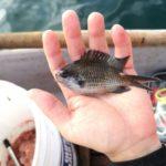【なかけんの『食べ釣り』】葉山のボートでORETSURI編集長と初めて釣りをしてみた