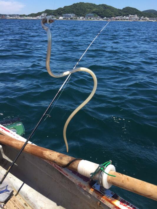 ボートでダイナンウミヘビを釣った