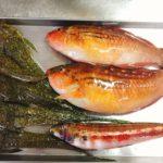 外道ならぬ貴殿たち(メゴチ・ホシササノハベラ・トラギス)を料理してみる