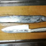 タチウオを料理してつまみをつくってみた【なかけんの『食べ釣り』】