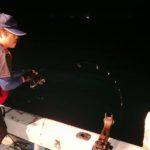 爆釣イカ鯛の巻【カリブの近海賊さんからの寄稿】