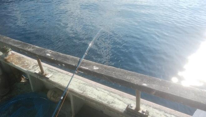 ライトタックルのコマセ釣り