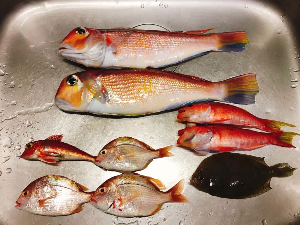 アマダイ釣りの釣果