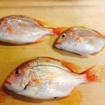黄鯛の押し寿司とカナガシラの握り寿司をつくってみた