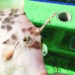 カワハギ釣り初心者がカワハギ専用竿を買うまでの思考の流れがこちらです