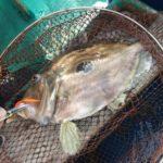 【泳ぐ掃除機】泳がせ釣りで釣れるマトウダイの豪快な捕食・追尾動画6選