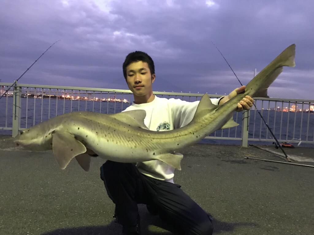 ふれーゆ裏で釣られたベイシャーク
