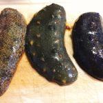 三色ナマコの食べくらべ。色によってナマコの味は変わるのか?