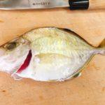 【これは旨い】城ケ島沖で釣ったカイワリをポワレにしてみた