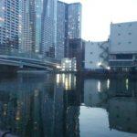 大都会東京で夜な夜な高級蟹を捕獲する話【くま日記】