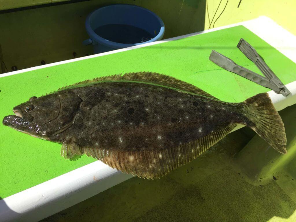 相模湾船釣り ヒラメ