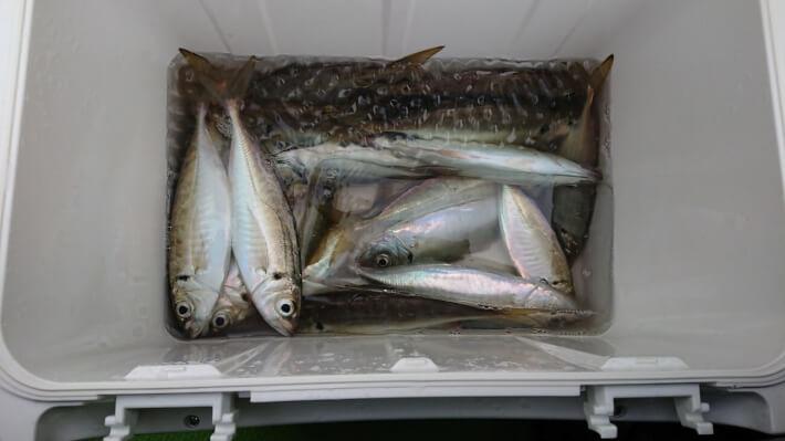 渡辺釣船店 横浜中華街経由でアジ釣り