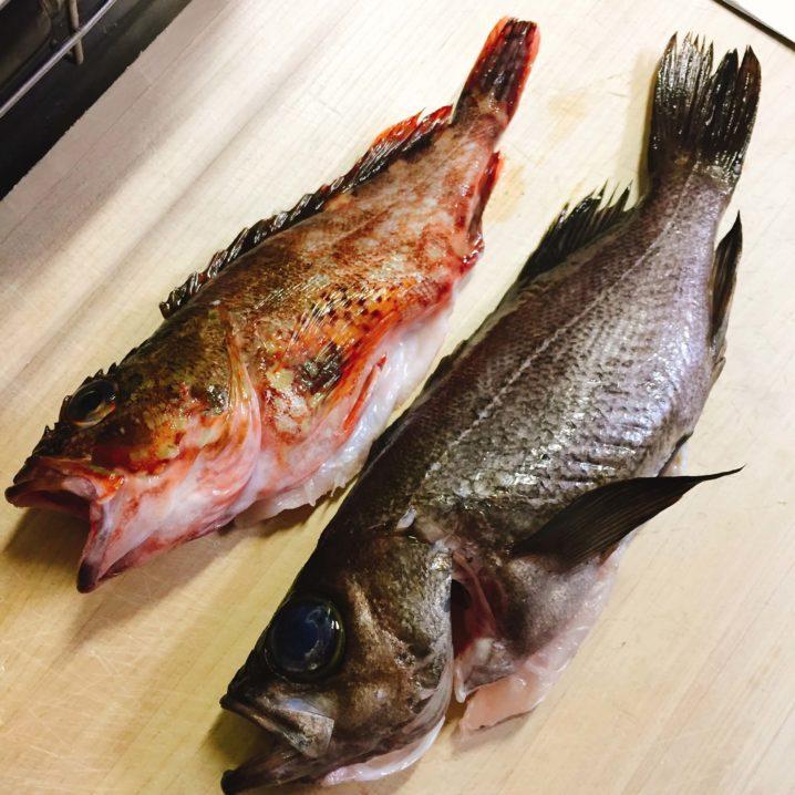 釣ったカサゴとメバル
