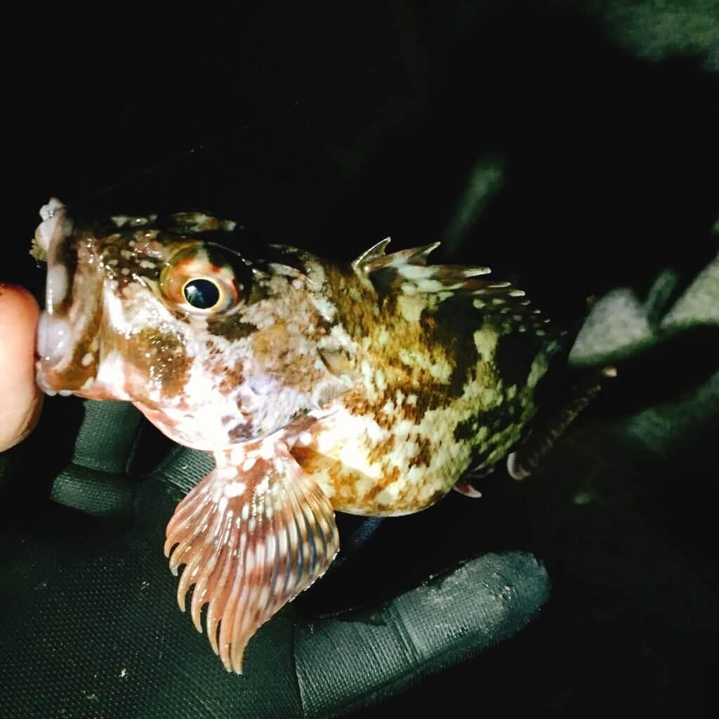 福浦岸壁 釣り カサゴ